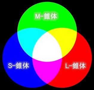 色覚 (1)